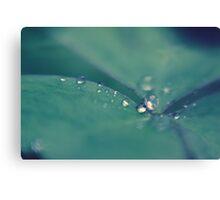 raindrops from heaven II Canvas Print