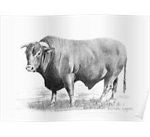 Santa Gertrudes Bull Poster