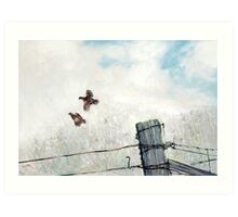 Quail Over Barbed Wire Art Print