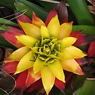 Bromeliad by ronholiday