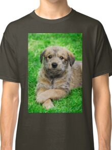 Cool-Puppy, Berger Picard  Classic T-Shirt
