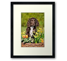Spaniel puppy amidst spring flowers Framed Print