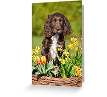 Spaniel puppy amidst spring flowers Greeting Card