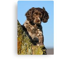 """I`m gorgerous"", German Spaniel puppy Canvas Print"