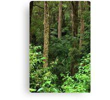 Rainforest Canvas Print