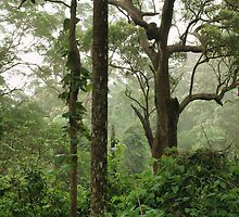 Rainforest by altmarkphoto