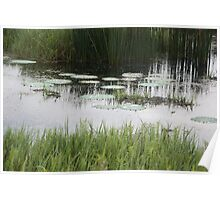 Reeds and reflections Poster