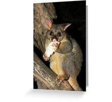 Brush Tailed Possum Greeting Card