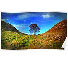 Hadrians Wall Tree Poster