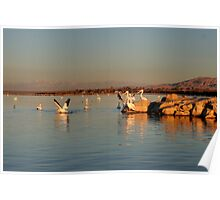 Pelicans in First Light - Salton Sea Poster