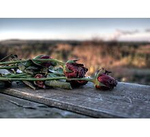 Morbid Beauty. Delamere. Photographic Print