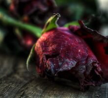 Sweet decay. Delamere rose. by kkimi88