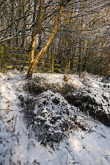 Winter Snow by Brett Still