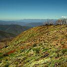 Vivad Geen, Mt Blue Rag by Joe Mortelliti