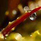Cactus, Drops and Flares... by tchebytchev