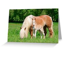 Haflinger, mom and foal Greeting Card