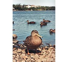 Happy Duck Photographic Print