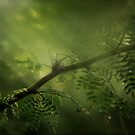 Meditation of Green by linaji