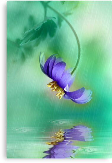 Spring showers by Lyn Evans