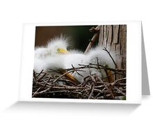 Juvi Egrets Greeting Card