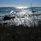 Kennebunkport, Maine - Brambles and the Sea by MaryinMaine
