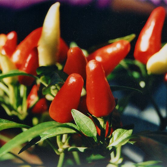 Peppers by fixtape