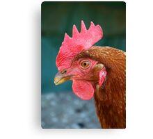 Domestic Chicken Canvas Print