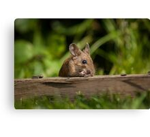 Field Mouse Eating Canvas Print