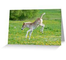 Haflinger foal frolicking Greeting Card