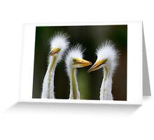Juvenile Egrets Greeting Card