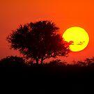 Etosha Sunset by Beth  Wode