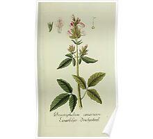 Plantarum Indigenarum et Exoticarum - Lukas Hochenleitter und Kompagnie 1788 - 071 Poster