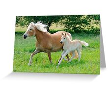 Haflinger mare with foal running  Greeting Card