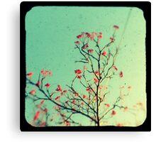 Reaching for aqua skies Canvas Print