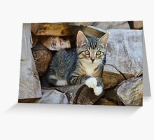 Cutie kitten on a wood pile Greeting Card