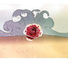 rose beach Photographic Print