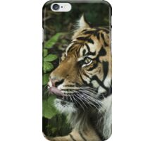 Tiger 02 iPhone Case/Skin