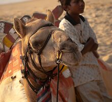 Camel and Boy by AjayP