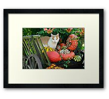 Cat and pumkins Framed Print