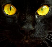 Watch in my eyes by FilleDeLEau