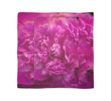 Peony ~ Paeonia ~ Pink Flower ~ Closeup ~ Ginkelmier Inspired Scarf