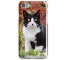 Tuxedo cat in front of a Japanese Maple iPhone Case/Skin