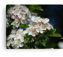 The Hawthorn in the Glen 2 Canvas Print