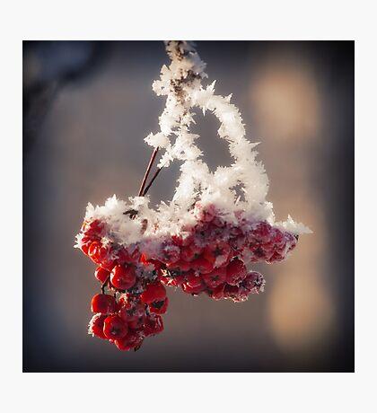Berries in Ice Photographic Print