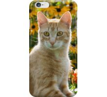 Red tabby cat watching attentively iPhone Case/Skin