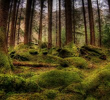 Gougane Barra Woods by Marloag