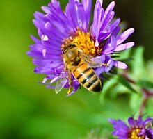 Bee on purple flower by mltrue
