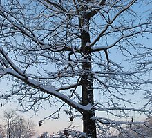 snow at day break by Tracey Hampton