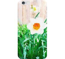Painted Daffodils iPhone Case/Skin