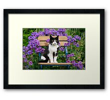 Tuxedo cat sitting on a garden chair Framed Print